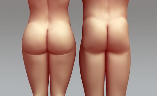 Мышца большая ягодичная - Мышечная система - Организм - MedClub.ru