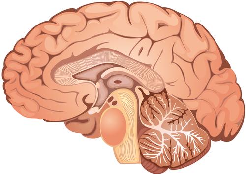 Шум мозга
